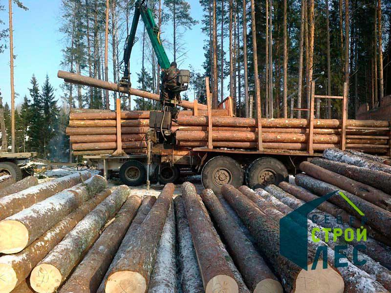 Заготовка зимнего леса